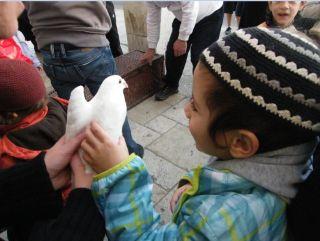 голуби, фото Киев еврейский